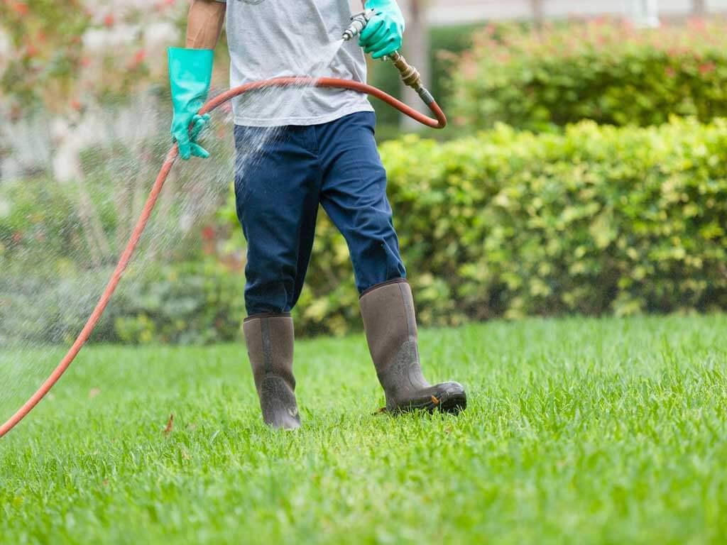 pest-control-treatment